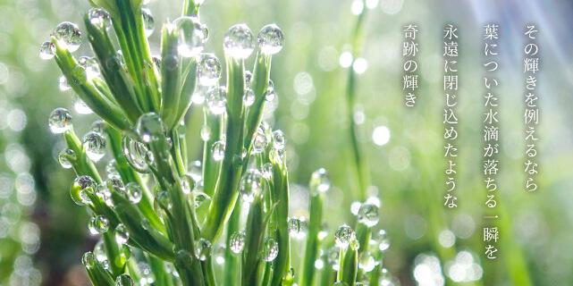 その輝きを例えるなら葉についた水滴が落ちる一瞬を永遠に閉じ込めたような奇跡の輝き